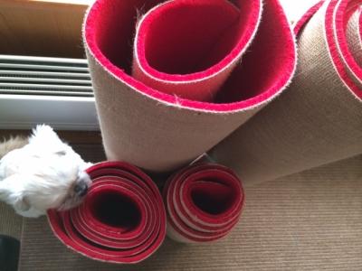 レッド絨毯