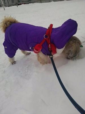 きなこちゃん雪大好き