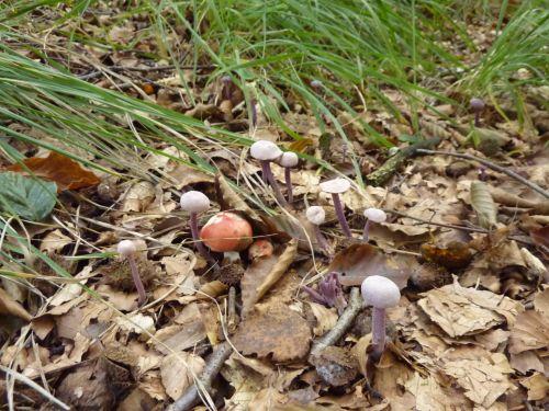 500_paddenstoel.jpg