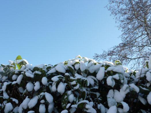 525_sneeuw4.jpg
