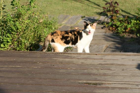 cat07a1.jpg