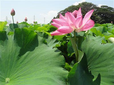 森川花はす田6