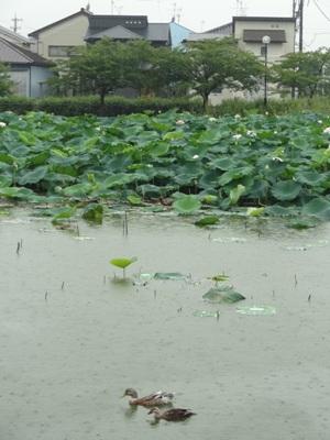 蛇池公園3