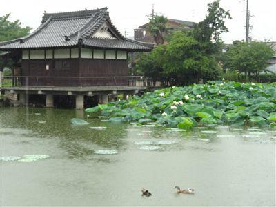 蛇池公園4