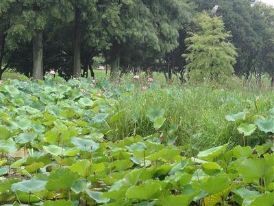 庄内緑地公園3