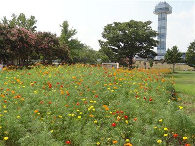 木曽三川公園6