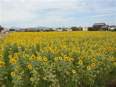 大垣ひまわり園1