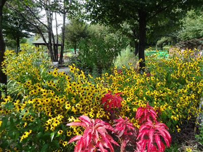 鞍ヶ池公園9
