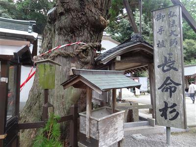 日照山極楽寺 88ヶ寺2番の長命杉