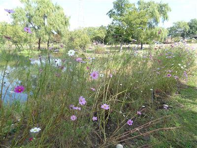 河川環境楽園オアシスパーク1