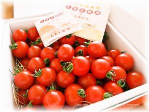 プチトマトいっぱい