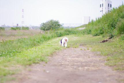 リリーくんと江戸川へ...。