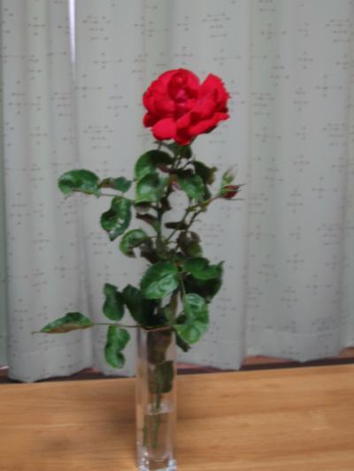 IMG_1643_convert_20120619091804.jpg
