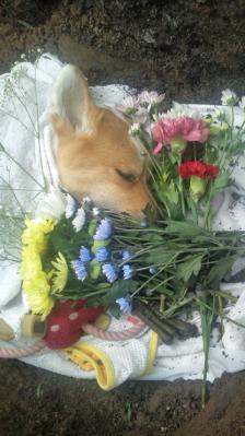 120725お花に囲まれて