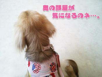 2012-07-01a_photo.jpg