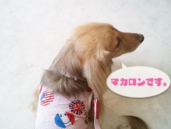 2012-07-01d_photo.jpg