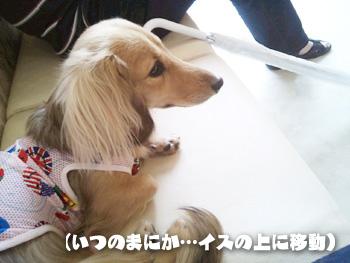 2012-07-01h_photo.jpg