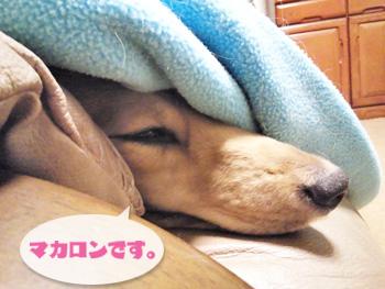 NCM_0010.jpg