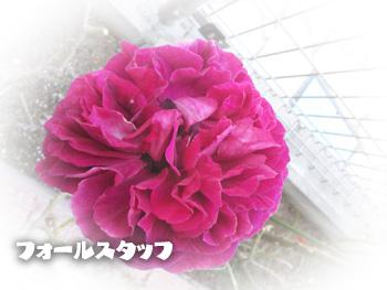 NCM_0028.jpg