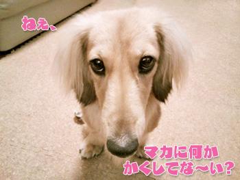 NCM_0095_20120811232927.jpg