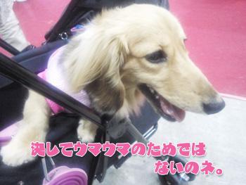 NCM_0104.jpg