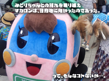 NCM_0115a.jpg