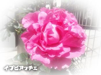 NCM_0175.jpg