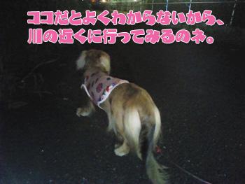 NCM_0183_20120828021309.jpg