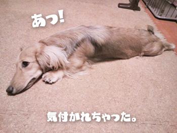 NCM_0227.jpg