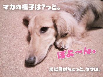 NCM_0228.jpg