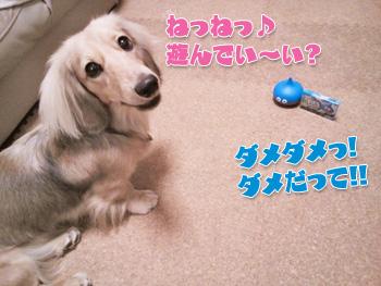 NCM_0236a_20120905004459.jpg