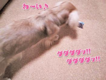 NCM_0237a.jpg