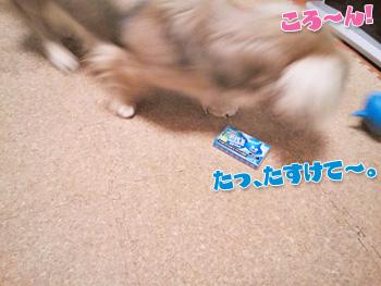NCM_0240_20120904010500.jpg
