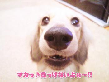 NCM_0259_20120911003921.jpg