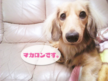 NCM_0270_20120913001102.jpg