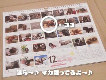 NCM_0796.jpg