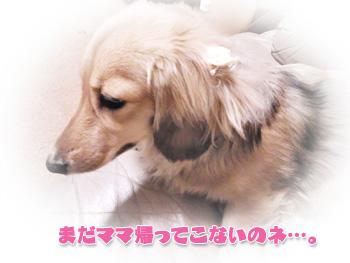 NCM_0963.jpg