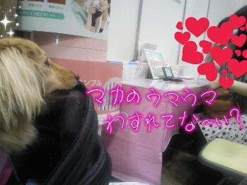 PicsArt_1336290306347.jpg