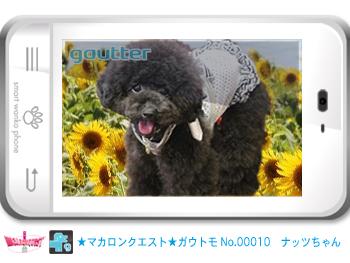 mq_gautomo_00010.jpg