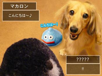 shyachipi_01.jpg