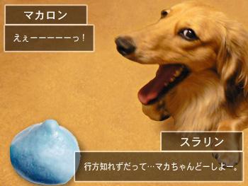 shyachipi_03.jpg