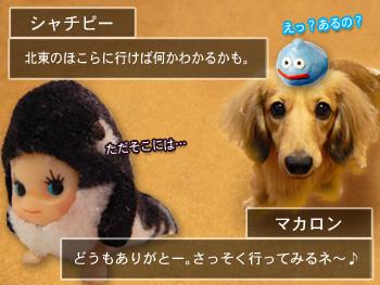 shyachipi_04.jpg