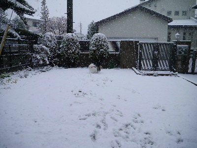 2013初雪4