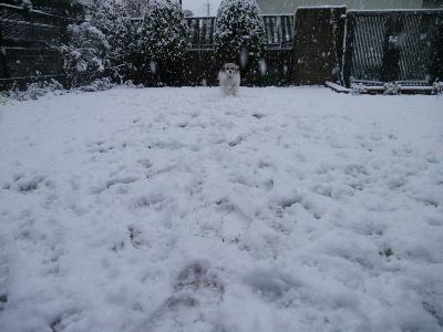 2013初雪8