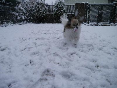 2013初雪10