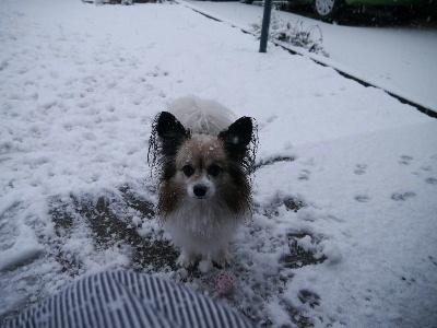 2013初雪11