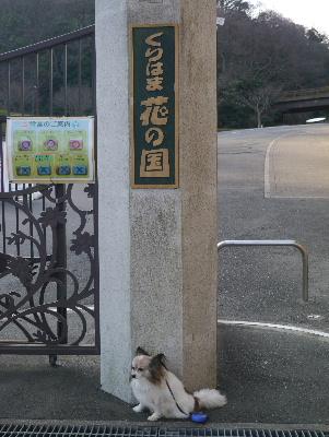 2013横須賀3
