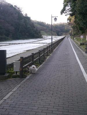 2013横須賀4