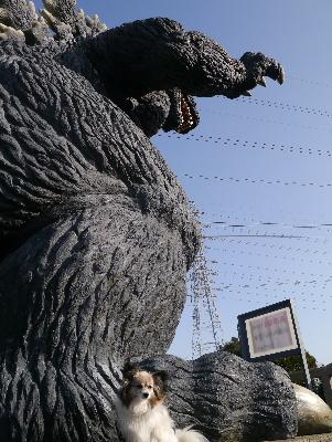 2013横須賀8