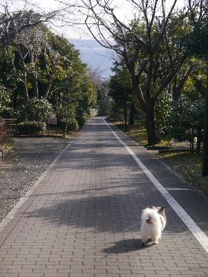2013横須賀11